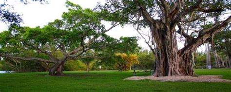 Mathison Hammock by Matheson Hammock Park Miami Dade County