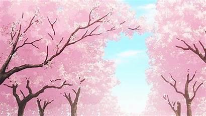 Sakura Anime Tree Spring Shoujo Ookami Kuro
