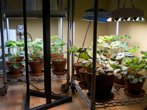 Lighting Your Indoor Garden  Electronic Products