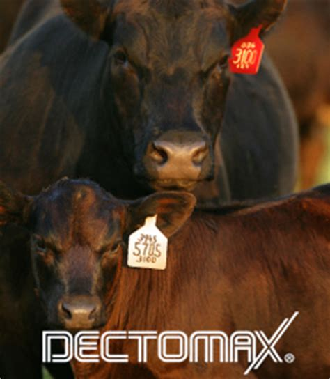 DECTOMAX® Pour-On Solution | Zoetis US