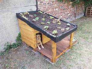 Doghouse With Green Roof / Niche Pour Chien Avec Toiture