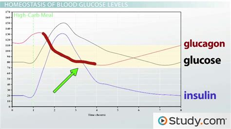 homeostasis  glucose levels hormonal control