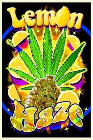 lemon haze pot marijuana blacklight poster print posters