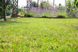 Rasen Kalken Wann : rasen kalken im winter rasen pflege im herbst das ist vor dem winter zu tun rasenpflege im ~ Orissabook.com Haus und Dekorationen