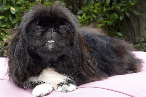 top 20 dogs that shed the most 100 top 20 dogs that shed the most 30 best top 20