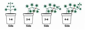 Indoor Grow Anleitung : low stress training taking back control of your garden ~ Eleganceandgraceweddings.com Haus und Dekorationen