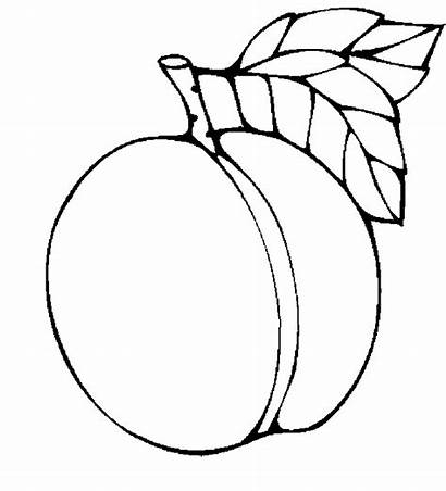 Apricot Clipart Coloring Peach Pages Clip Printable