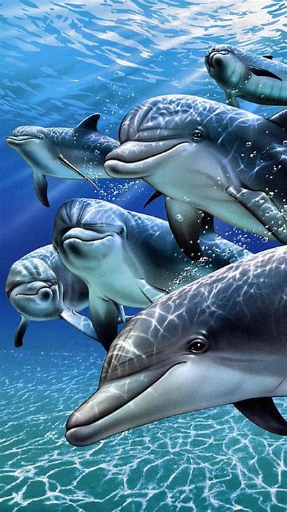 Phone Dolphins Wallpapers Cell Animals Dolphin Screen