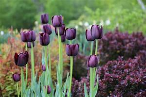 Aftercare Tips For Spring Bulbs