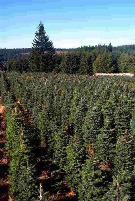 sky ranch tree farm