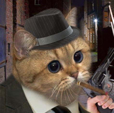 mafia cat starecat grafics cat   meme