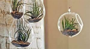 Plantes à Suspendre : diy 5 id es cr atives pour un jardin d 39 int rieur bio ~ Premium-room.com Idées de Décoration