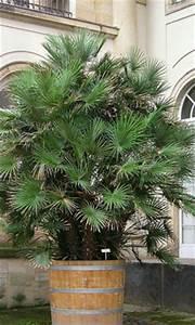 überwintern Von Palmen : palmen f r den garten winterharte arten und pflegetipps ~ Michelbontemps.com Haus und Dekorationen