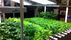 Hydroponic indoor gardening challenges while growing for Indoor vegetable garden grow