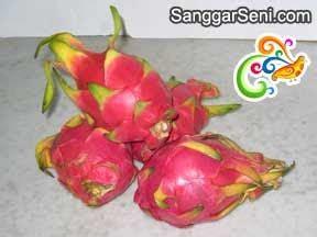 sanggar seni    eat  dragon fruit