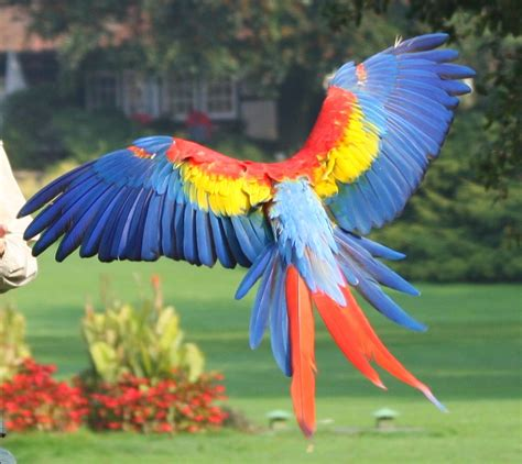 macaw bird life and entertainment scarlet macaw beautiful parrot