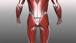Muscles Of The Gluteal Region - Part 1