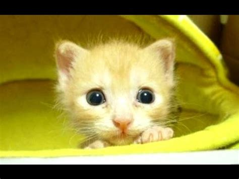 cute kittens compilation  hd youtube