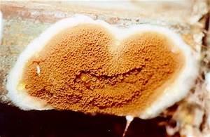 moisissure sur murs interieurs With champignons sur les murs interieurs