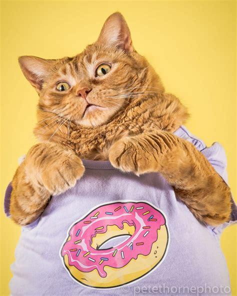 Photo Series Of Cute Fat Cats Vuingcom