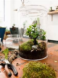 Pflanzen Für Drinnen : machen sie ihr haus gr ner mit einem terrarium wohnideen ~ Frokenaadalensverden.com Haus und Dekorationen