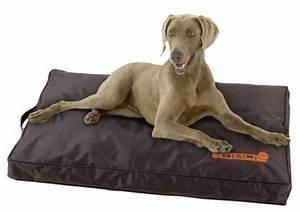 le tapis pour chien grande taille est ici With tapis pour chiens