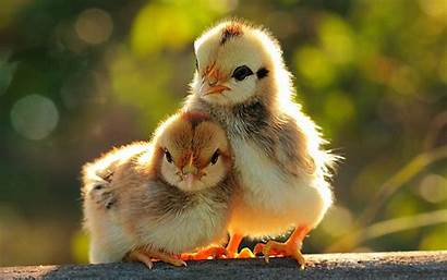 Wallpapers Chicks Funny Backgrounds Tag