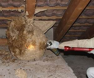 Mittel Gegen Wespen Im Dach : wie entfernt man ein wespennest wespennest unter dem dach umsiedlung und entfernung wespennest ~ Eleganceandgraceweddings.com Haus und Dekorationen