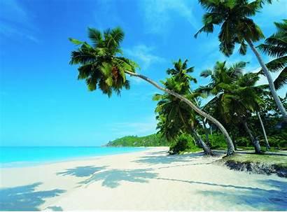 Paradise Penny Palm Tock