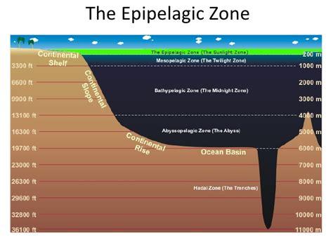 zonation   ocean powerpoint