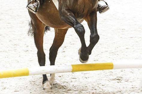 pin auf pferdegesundheit