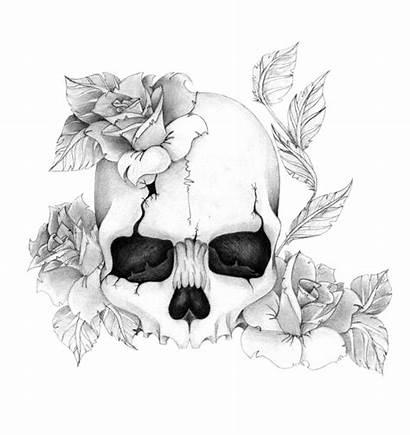 Skull Roses Flower Tattoo Rose Drawings Drawing