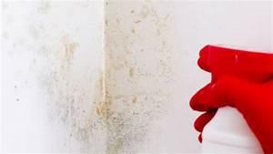 Nettoyer Mur Exterieur Bicarbonate : comment nettoyer le mur peint au latex ~ Melissatoandfro.com Idées de Décoration