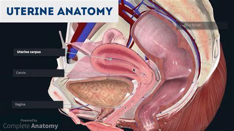 Anatomy of the Uterus | Ovaries | 3D Anatomy Tutorial ...