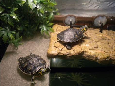 uvb pour ma tortue a quelle distance aquariums et