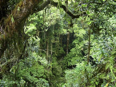 tropical equatorial rainforest  level geography