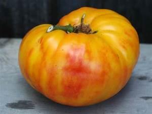 Gold Medal Tomato