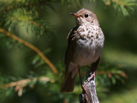 birding is fun ten most misidentified birds in the