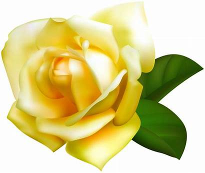 Rose Transparent Yellow Clipart Roses Flower Flowers