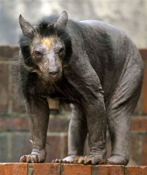 These 13 Animals Without Fur Look Totally Different. The