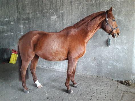 hufprobleme arthrose und stoffwechselprobleme beim pferd
