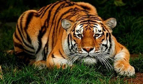 Top 10 Beautiful Animal Wallpapers - animal picture on animal picture society