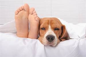 is it healthy to sleep with your pets