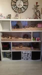 Meerschweinchen Gehege Ikea : mein selbstgebauter hamsterk fig aus einem ikea kallax regal animals pinterest ~ Orissabook.com Haus und Dekorationen