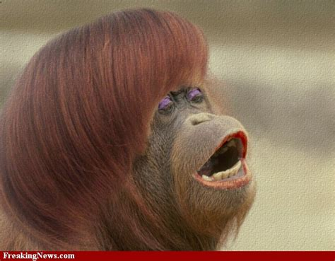 monkey   lady realhousewivesrealprofessor