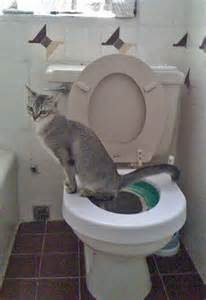toilet cat america has the best toilets for cats poc