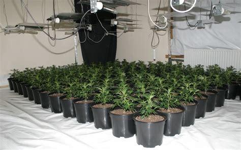 construire sa chambre de culture une culture de cannabis découverte grâce à une fuite d 39 eau