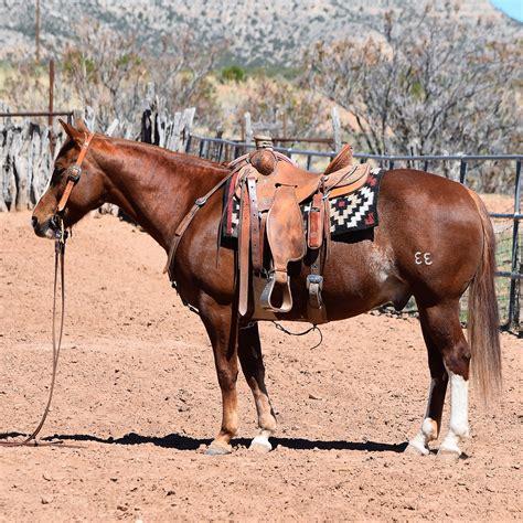 ranch horses gentle horse rope fullsize play