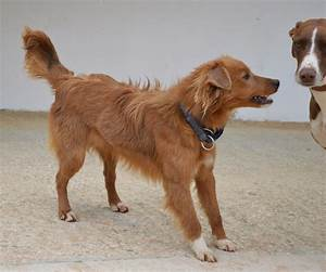 Hunde Aus Zentral Portugal : hunde aus zentral portugal adoptieren dusty ~ Lizthompson.info Haus und Dekorationen
