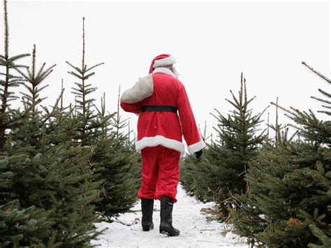 christmas tree farm central il where to cut your own tree in the chicago region orland park il patch